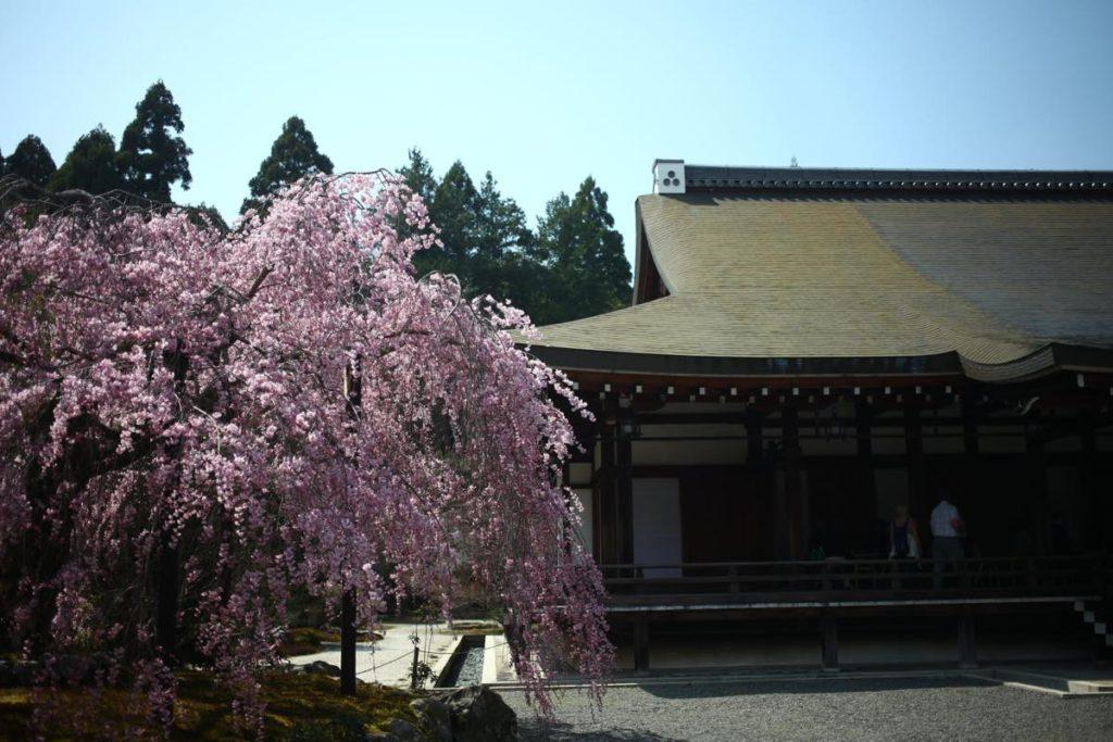 saihoji kokedera